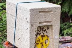 PolyNuc cast swarm