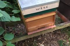 WSBKA Hive at apiary