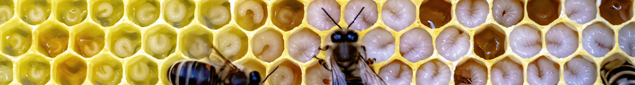 West Suffolk Beekeepers' Association